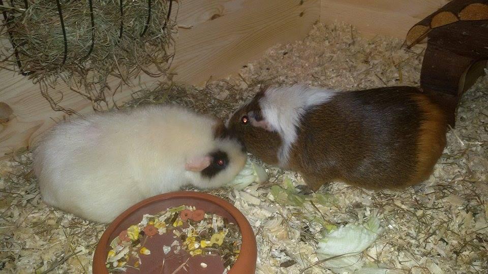 Pelle und Lukas
